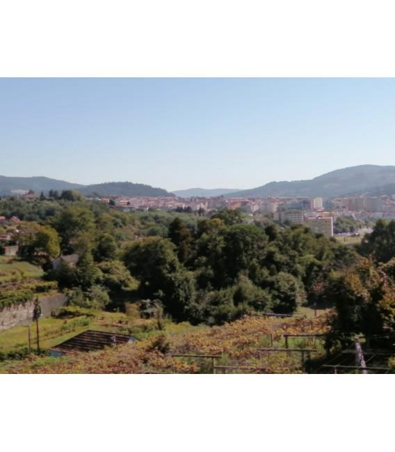 Casa para Restaurar en Pontevedra - Monteporreiro